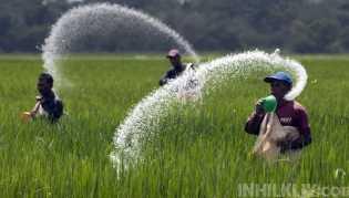 Pupuk Subsidi Kembali Langka, Petani Harapkan Dinas Pertanian Sergai Bertindak