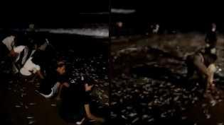 Ribuan Ikan Terdampar di Pantai, Netizen: Seperti Sebelum Tsunami Aceh!