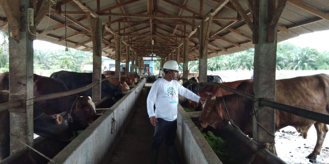 Beternak Sapi, Kesibukan Lain Wakil Bupati Sergai