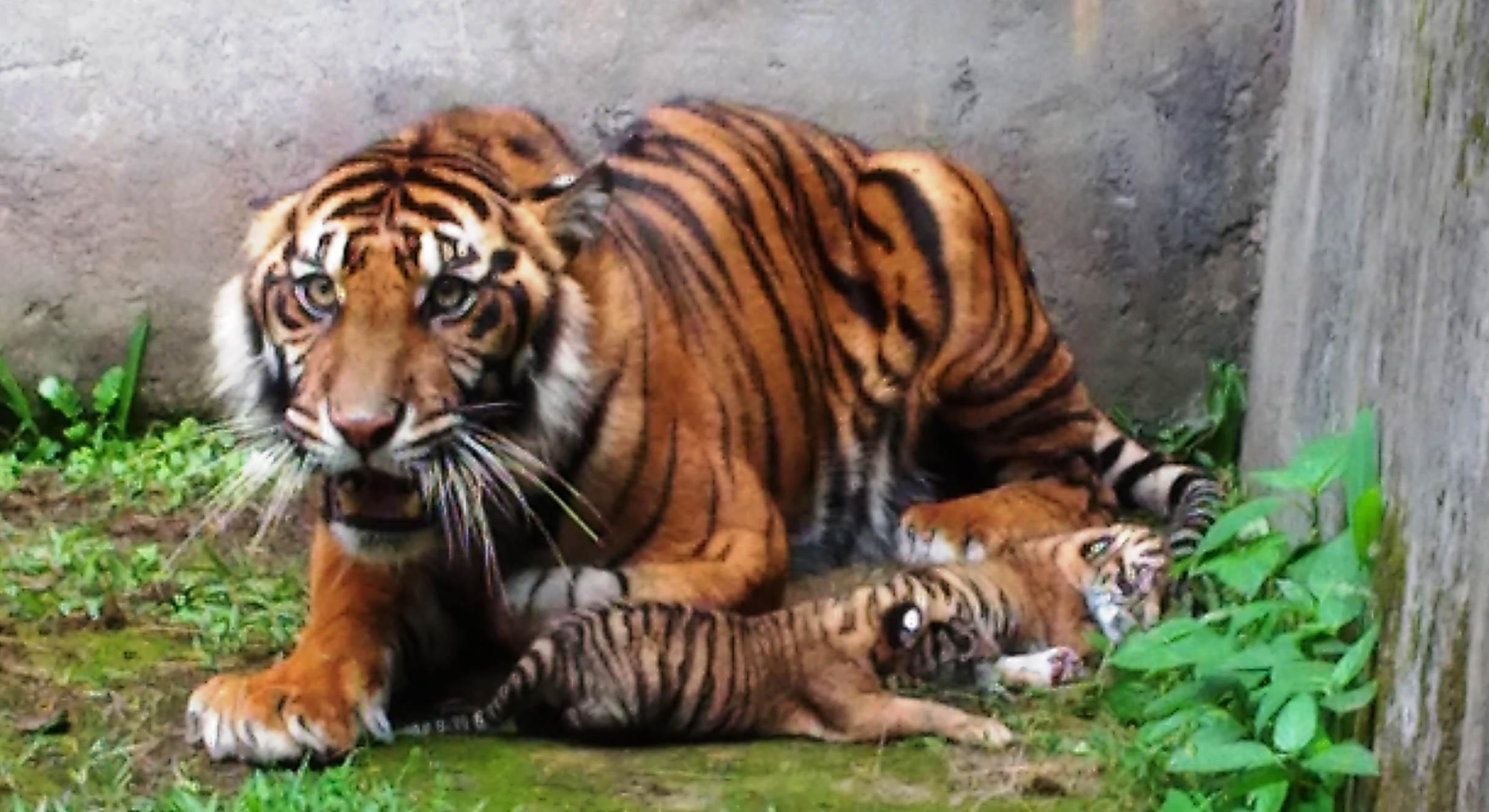 Taman Marga Satwa dan Budaya Kinantan Kedatangan 9 Satwa dari Bali Zoo