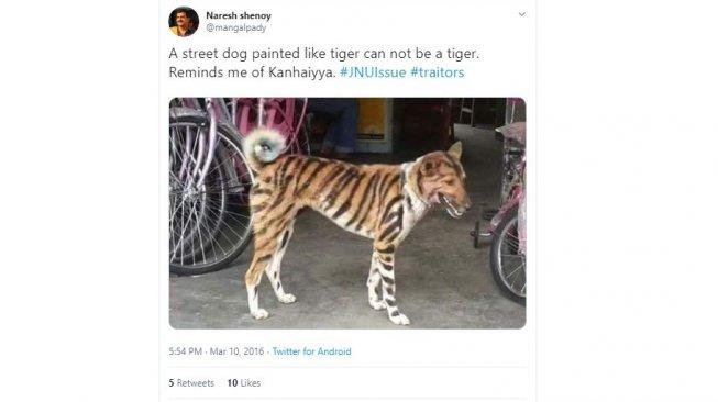 Petani Ramai-ramai Cat Anjing Jadi Mirip Harimau, Kenapa?