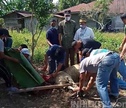 Bupati Sergai Serahkan Bantuan Hewan Kurban di Desa Firdaus