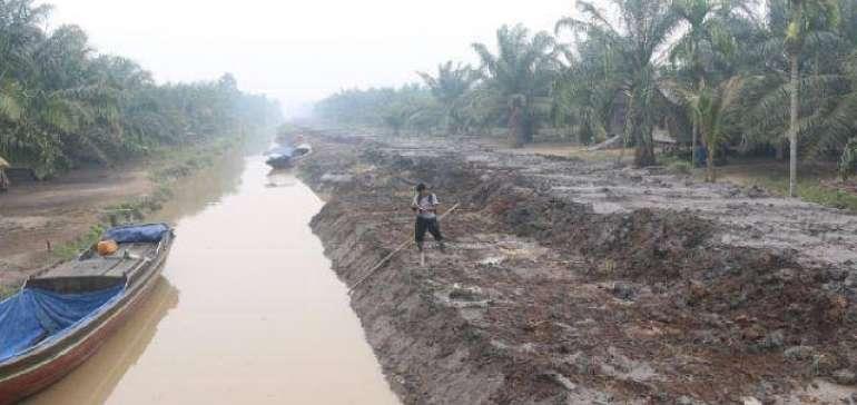 Nasib Penyelamatan Kebun Kelapa Petani Inhil, Progres Pembangunan Tanggul Hanya 30 Persen