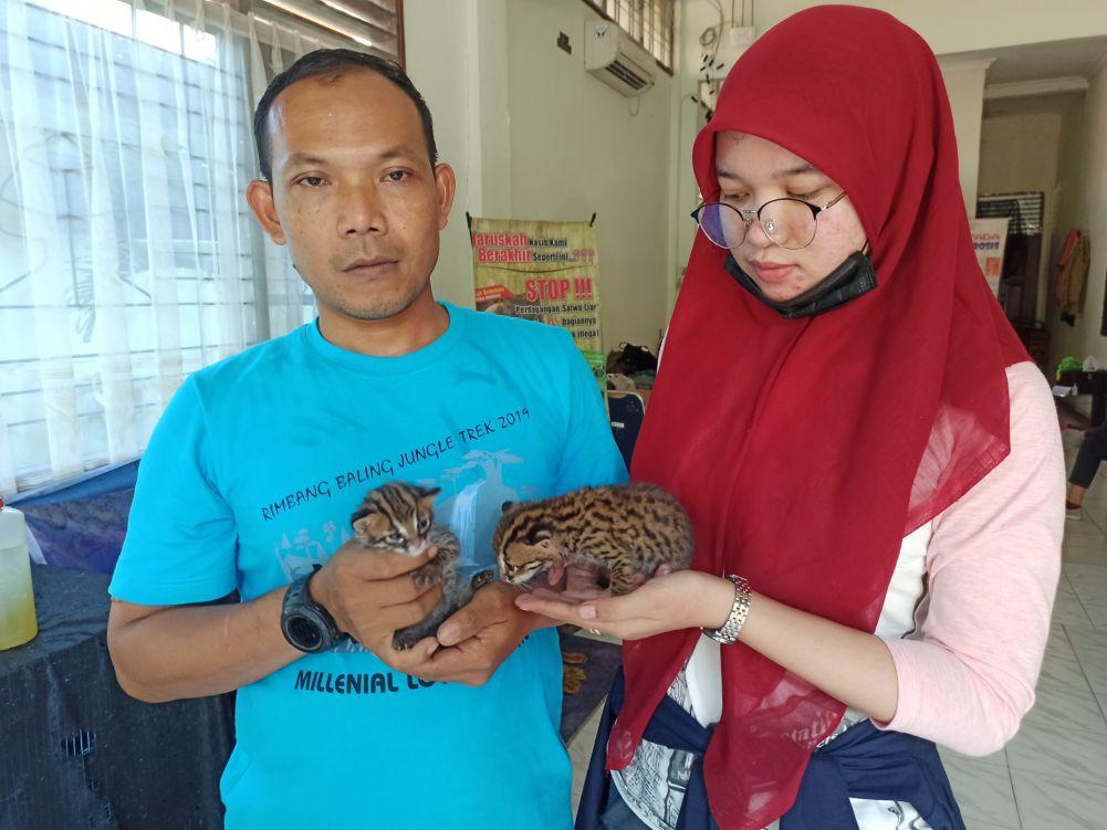 Kucing Hutan Dapat Perhatian Khusus di Klinik BBKSDA Riau