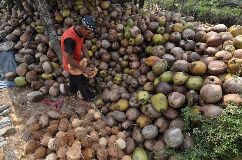 Harga Kelapa Anjlok Picu Deflasi di Kota Tembilahan