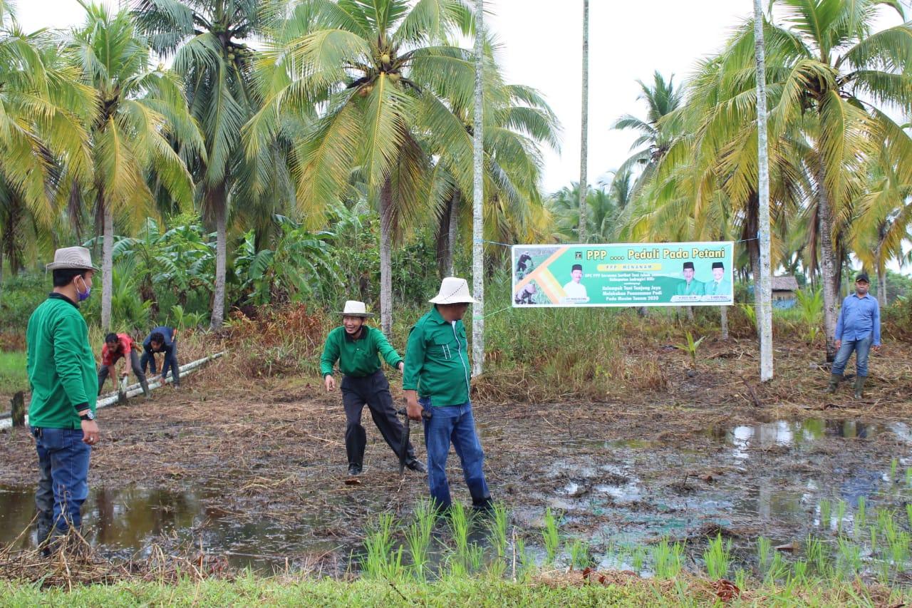 Musim Tanam 2020, PPP dan STII Inhil Dampingi Poktan Tanjung Jaya