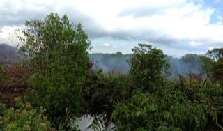 Kebakaran Lahan Seluas 3 Hektare di Inhil Diduga Masuk Kawasan Konsesi PT IGJA