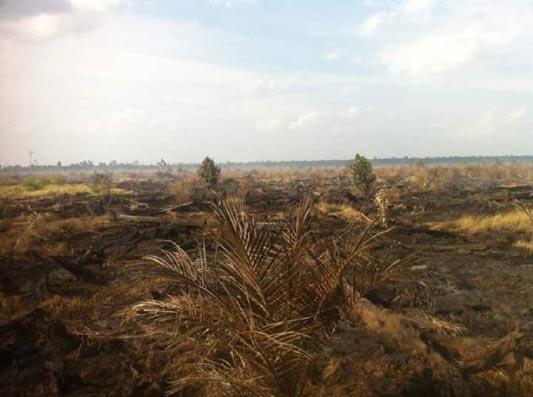 Dulu Kasusnya di-SP3-kan, Kini Lahan PT Parawira di Pelalawan Kembali Terbakar