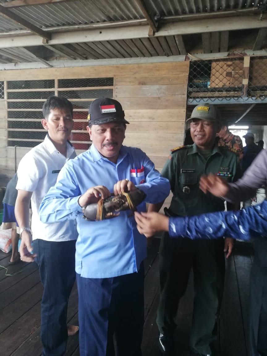 Ketua DPC HNSI Inhil Tinjau Potensi Siput Laut Sebagai Komoditas Ekspor
