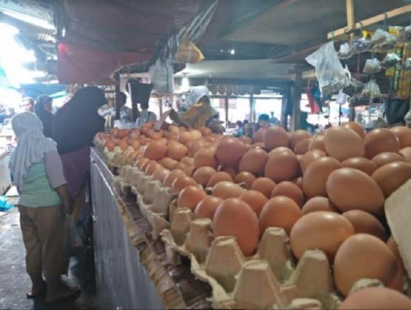 Pekan ini, Harga Telur Ayam Ras Masih Normal
