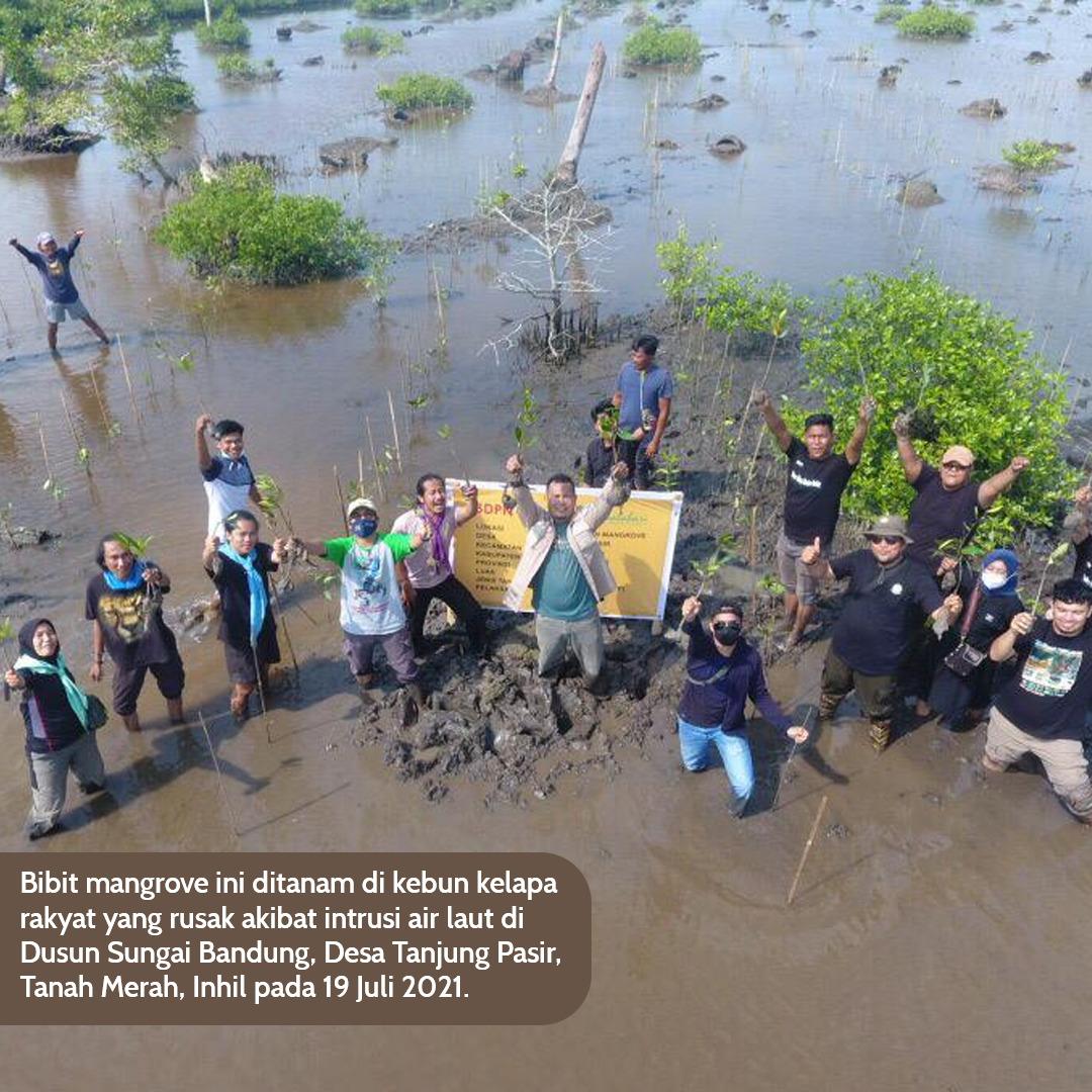 Sempena Hari Mangrove Se-Dunia,  Inisiatif Dari Kampung, Akselerasi Rehabilitasi Mangrove