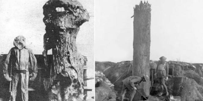 Pohon Pencabut Nyawa Saat Perang Dunia I
