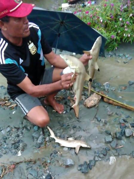 Heboh, Masyarakat Temukan Hiu Saat Banjir Sentani