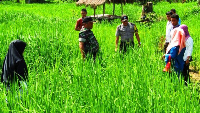 Ini yang Dilakukan Prajurit TNI dan Polri Untuk Petani