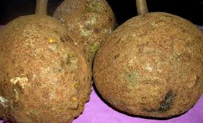Durian Tak Berduri, Si Gundul dari Lereng Rinjani