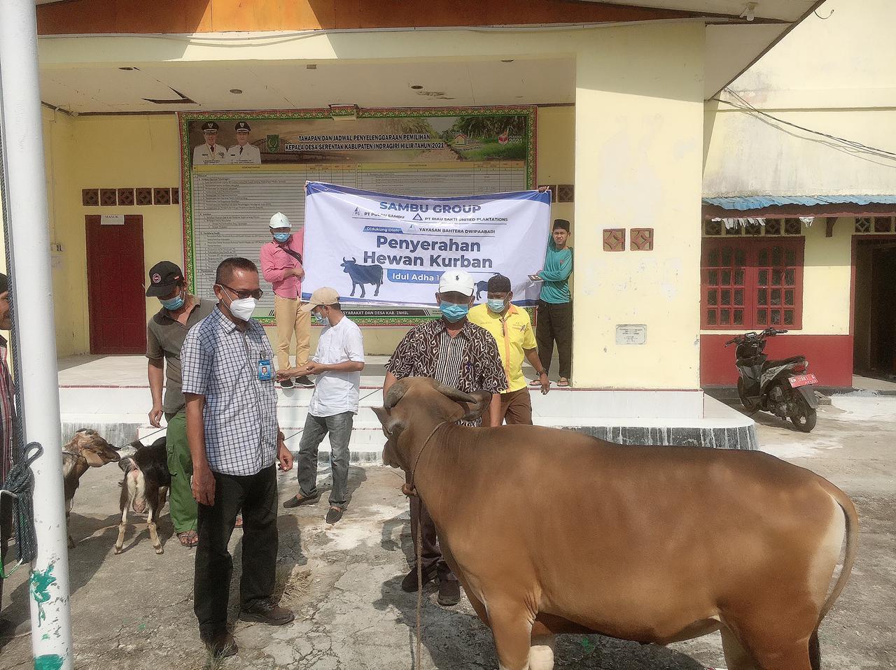 Melanjutkan Tradisi, Sambu Group Salurkan Hewan Qurban 6 Ekor Sampi dan 14 Ekor Kambing