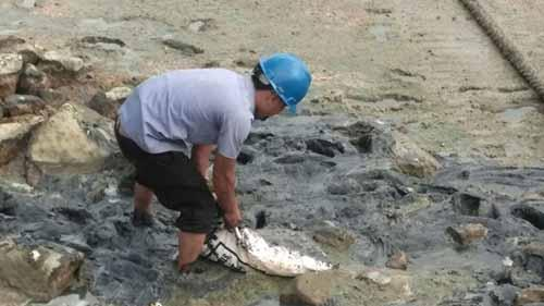Miris, PT Nagamas Palm Oil Gunakan Tali Tambang sebagai Oil Boom untuk Bersihkan Tumpahan Minyak di Laut Dumai