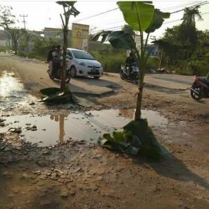 Tak Kunjung Diperbaiki, Warga Tanam Pohon Pisang di Jalan Sigunggung