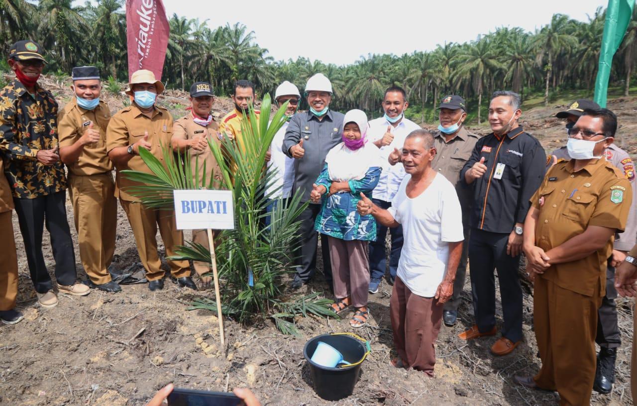 Bupati Alfedri Tanam Perdana Kebun PSR Sialang Baru