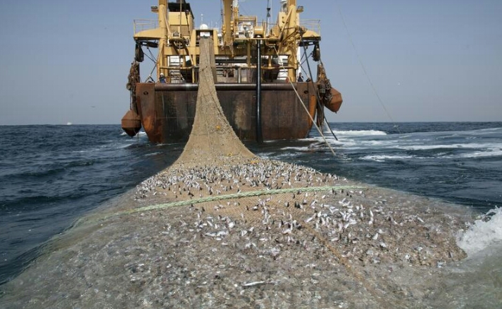 Selamatkan Ekosistem Sungai Siak, Nelayan Dilarang Gunakan Pukat Harimau untuk Mencari Ikan