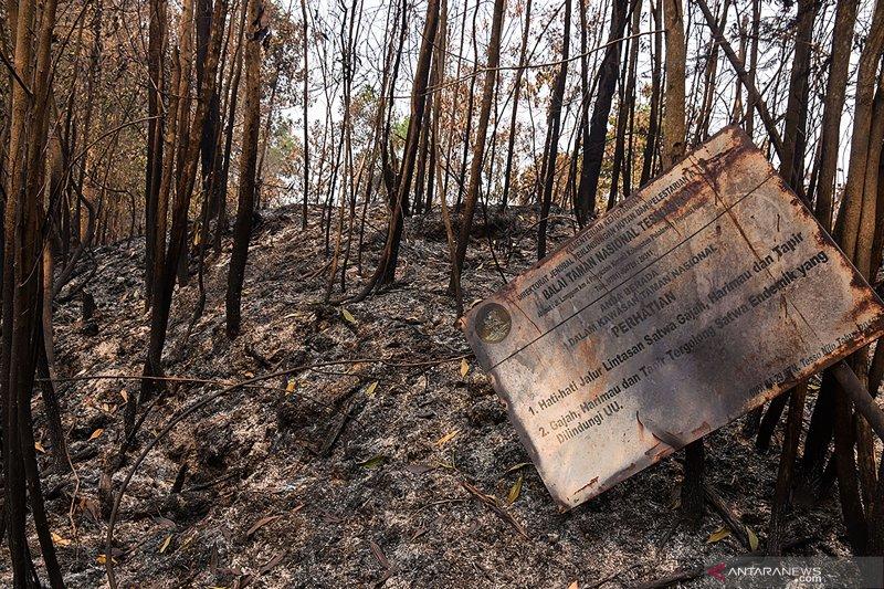 Polda Riau Tetapkan 31 Tersangka Karhutla Sepanjang 2019
